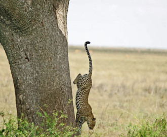 w_Tanzania_serengiti_006